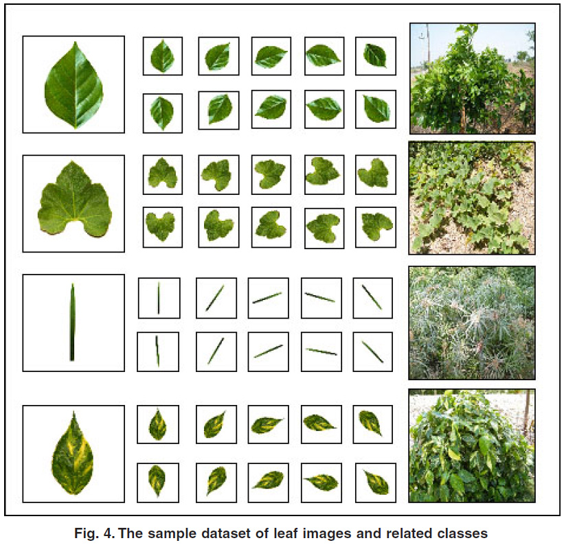 Leaf Recognition for Plant Classification Using GLCM and PCA Methods