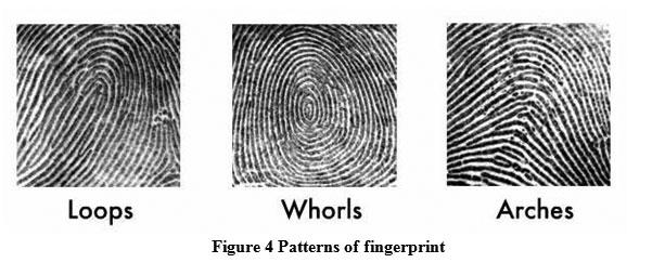 Improve Fingerprint Recognition Using both Minutiae Based and ...