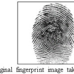 Figure 3.Original fingerprint image taken from DB1