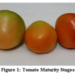 Figure 1: Tomato Maturity Stages