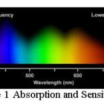 Figure 1 Absorption and Sensitivity curve